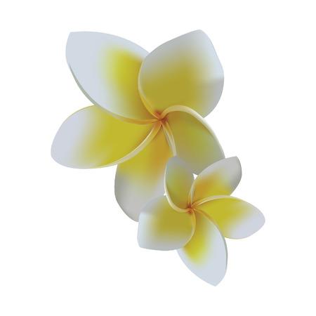 White leelawadee flower Stock Vector - 81365377