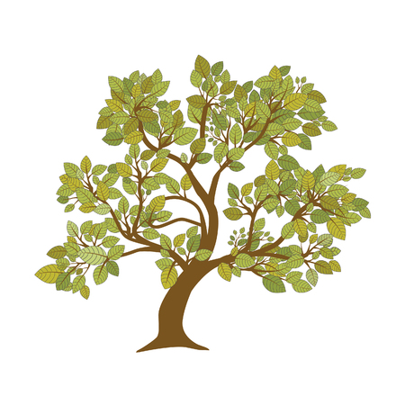 Big tree natural plant