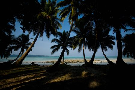 A pristine palm tree lined beach in Havelock Island, India. Banco de Imagens
