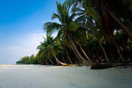 windswept: Windswept palm trees line a secluded empty beach on Havelock Island in India.