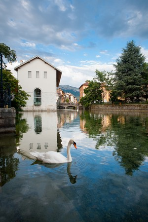 A white swan wades in a canal in Annecy, France, a village in the Alps.