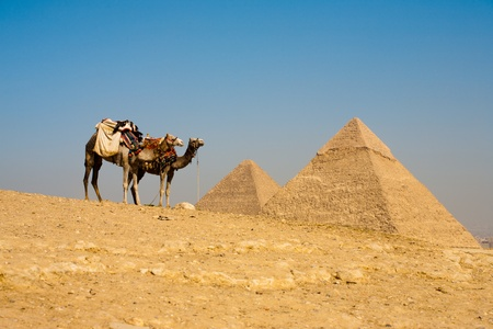 A pair of camels at the viewpoint wait while the Pyramids of Cheops and Khafre loom in the distance at Giza in Cairo, Egypt Banque d'images