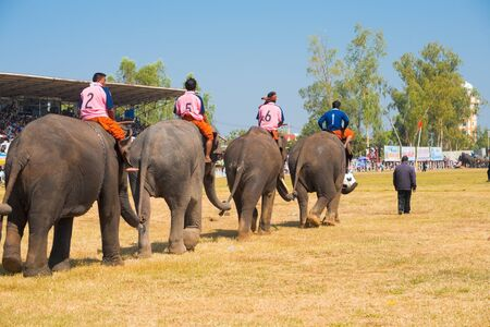 surin: SURIN, ISAN, THAILAND - NOVEMBER 20, 2010: An elephant soccer team enters the field holding each others tails at the annual Surin Elephant Roundup on November 20, 2010 in Surin, Thailand