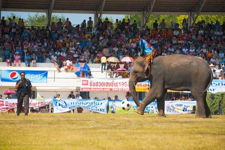 surin: SURIN, ISAN, THAILAND - NOVEMBER 20, 2010: An elephant kicks a soccer ball during an exhibition elephant soccer match at the annual Surin Elephant Roundup on November 20, 2010 in Surin, Thailand Editorial