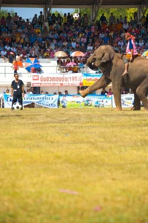 surin: SURIN, ISAN, THAILAND - NOVEMBER 20, 2010: An elephant kicks a soccer ball high during an exhibition elephant soccer match at the annual Surin Elephant Roundup on November 20, 2010 in Surin, Thailand