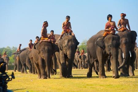 수린, 태국 - 년 11 월 20 일 : 코끼리와 조련사의 큰 그룹은 수린, 태국에서 2010 년 11 월 20 일에 연간 수린 코끼리 검거에 주요 perofrmance 필드에 걸어 에디토리얼