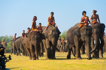 SURIN, THAILAND - NOVEMBER 20, 2010: A large group of elephants and trainers walk on the main perofrmance field at the annual Surin Elephant Roundup on November 20, 2010 in Surin, Thailand
