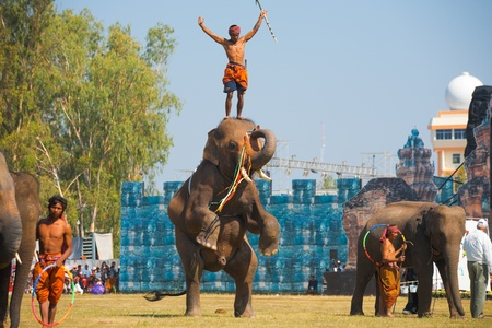 mahout: SURIN, THAILAND - NOVEMBER 20, 2010: An mahout stands on the head of an elephant standing on its hind legs during a trick show at the Surin Elephant Roundup on November 20, 2010 in Surin, Thailand Editorial