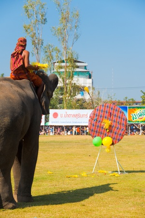 bursting: SURIN, ISAN, THAILAND - NOVEMBER 20, 2010: An elephant throws darts to pop balloons during an elephant trick performance at the annual Surin Elephant Roundup on November 20, 2010 in Surin, Thailand