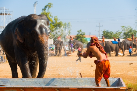 mahout: SURIN, ISAN, THAILAND - NOVEMBER 20, 2010: A trainer gives his elephant a cooling water bath before the performance at the annual Surin Elephant Roundup on November 20, 2010 in Surin, Thailand