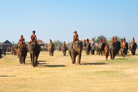 surin: SURIN, ISAN, THAILAND - NOVEMBER 20, 2010: A large group of elephants walk on the performance field during the annual Surin Elephant Roundup on November 20, 2010 in Surin, Thailand