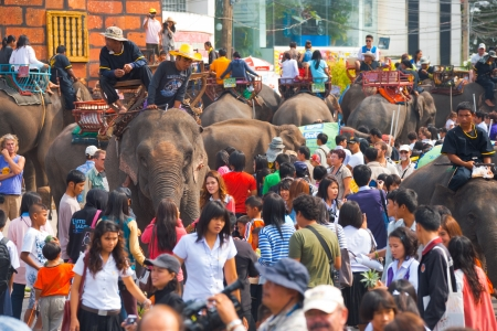 SURIN, ISAN, THAILAND - NOVEMBER 19, 2010: Elephants and crowds of adoring people mix and mingle together at the annual Surin Elephant Roundup on November 19, 2010 in Surin, Thailand