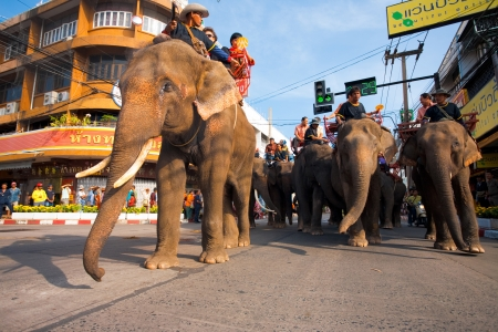 SURIN, ISAN, THAILAND - NOVEMBER 19, 2010: A group of elephants and passengers march in dowtown Surin during the parade at the annual Surin Elephant Roundup on November 19, 2010 in Surin, Thailand