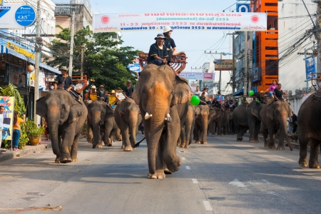 SURIN, ISAN, THAILAND - NOVEMBER 19, 2010: A large herd of elephants walk slowly down a downtwon street during the parade at the annual Surin Elephant Roundup on November 19, 2010 in Surin, Thailand