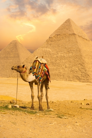 A patient camel with a colorful saddle waits for its owner in front of the pyramids of Giza in Cairo, Egypt.  Vertical photo
