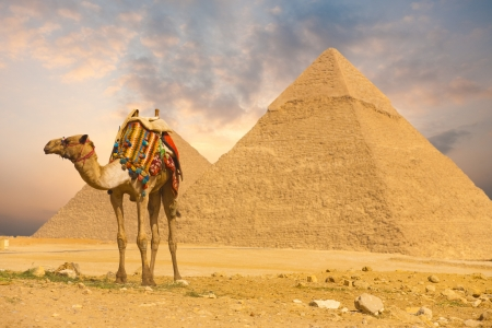cairo: A colorfully saddled camel waits for its owner in front of the pyramids with a beautiful sky of Giza in Cairo, Egypt.  Horizontal