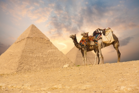 A pair of saddle backed camels wait near a pair of Giza pyramids in Cairo, Egypt Stock Photo