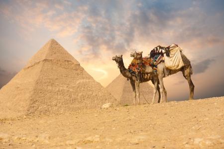 pyramide egypte: Une paire de chameaux de selle adoss�s � attendre pr�s d'une paire de pyramides de Gizeh au Caire, en Egypte Banque d'images