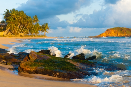 A beautiful tropical landscape of waves crashing over a moss covered rock, palm trees and an island just off the rough waters of Mirissa, Sri Lanka