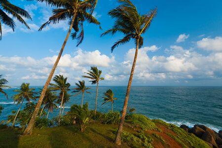 草から美しいヤシの木萌芽カバー、ビーチ リゾート村のミリッサ、スリランカでこの海の風景の中の岬 写真素材