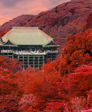 brilliant colors: Kiyomizu-dera wooden temple seen from distance tucked in forest with brilliant leaves of autumn colors with crowds of foreign tourist visitors during sunset at evening in Kyoto, Japan