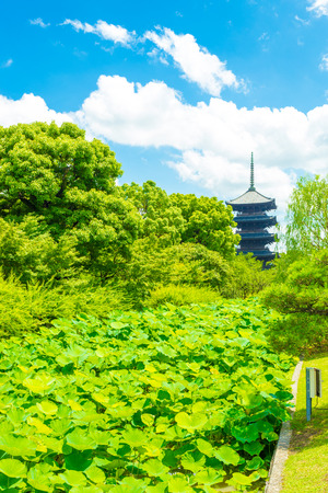 lilypad: Dense lilypad garden and green trees direct the eyes towards the 5 story pagoda of Toji Temple, the tallest tower in Japan, located in Kyoto on a clear, sunny blue sky day