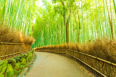japones bambu: Camino vacío sendero ligeramente curva alineado con la cerca del heno y altos árboles de bambú en la madrugada en el bosque de bambú de Arashiyama Grove en Kyoto, Japón. Horizontal