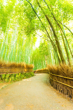 walkway: Bending, twisting footpath road lined with hay fence and soaring bamboo trees at early morning in Arashiyama Bamboo Grove forest in Kyoto, Japan. Vertical