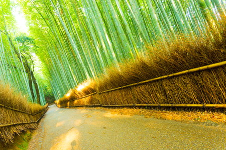 straight path: Straight path lined by grass fence and tall bamboo trees in the morning at Arashiyama Bamboo Grove forest in Kyoto, Japan. Tilted