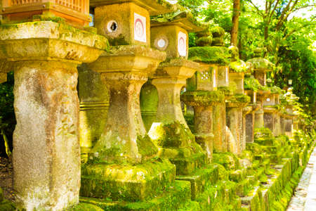 todaiji: Row of repeating moss covered stone lanterns at Todai-ji temple complex in Nara, Japan Stock Photo