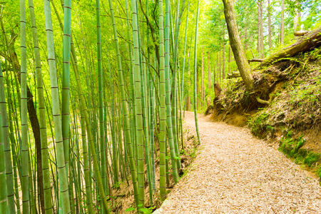 unused: An unused leaf covered bamboo forest road leads to the grounds of Tsumago Castle overlooking the post station town of Tsumago on the Nakasendo Route. Horizontal