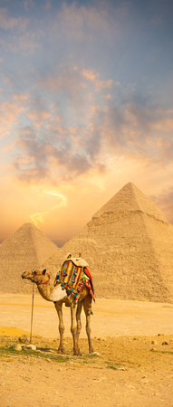 saddle camel: Brilliant sunset behind camel with colorful saddle in front of the Egyptian pyramids of Giza in Cairo, Egypt.  Plenty of copy space