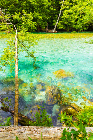 pristine: Pristine, turquoise water of the crystal clear Azusa River flows through unmolested forest in Japanese Alps town of Kamikochi, Nagano, Japan. Vertical Stock Photo