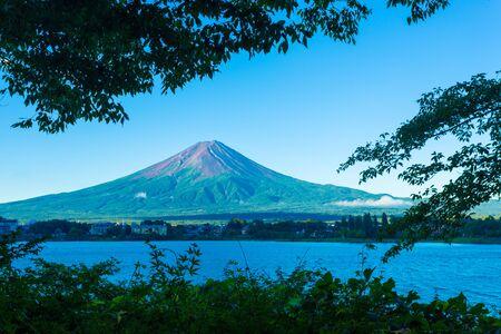 kawaguchi ko: Foreground trees frame a snowless dirt volcanic cone of Mount Fuji above Kawaguchiko Lake during early summer morning in Japan