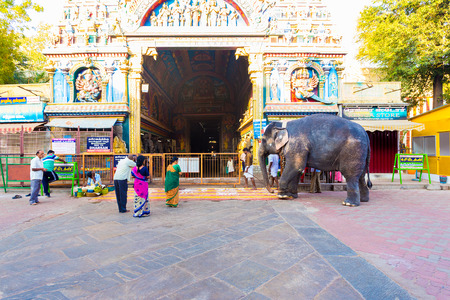 worshipers: Madurai, India - February 19, 2015: Hindu worshipers bow to a large resident elephant entering the gateway entrance at Meenakshi Amman Temple in the morning