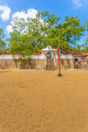 Dirt field and south compound steps lead to sacred Jaya Sri Maha Bodhi fig tree on a blue sky day in Anuradhapura capitol ruins in Sri Lanka. Vertical