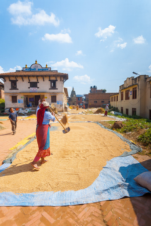 crop harvest: Bhaktapur, Nepal - October 25, 2013: Nepali woman shoveling grain drying in the sun after summer harvest season