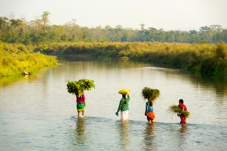 Chitwan, Nepal - December 3, 2007: Rural village women wading through knee-high river water with bundles of straw at autumn harvest season