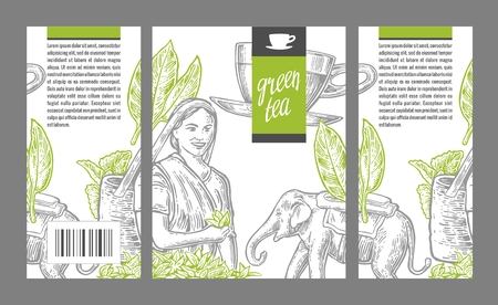 picker: Tea picker woman, tea leaves, cup, elephant. engraved vintage isolated illustration for label green tea, packaging, box. Illustration