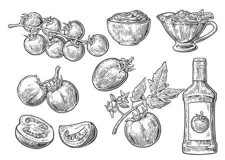 Set of tomatoes. Tomato, half and slice, ketchup bottle, tomato sauce in a plate. vintage engraved illustration isolated on white background. Ilustração