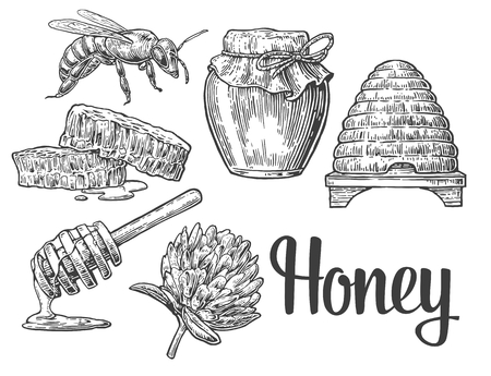 honeyed: Honey set. Jars of honey, bee, hive, clover, honeycomb. vintage engraved illustration.
