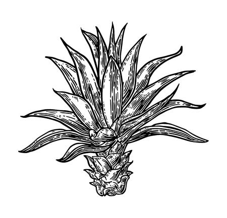 Salt shaker. Vintage vector engraving illustration for label, poster, web. Ilustrace