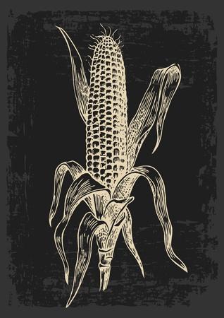 리프와 개 암 나무 열매에 잘 익은 옥수수. 벡터 빈티지 조각 그림입니다. 어두운 배경에 절연 일러스트