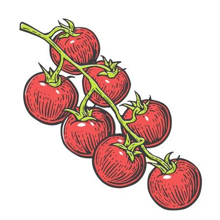tomate cherry: manojo de tomate. Vector ilustración grabada aislado en el fondo blanco