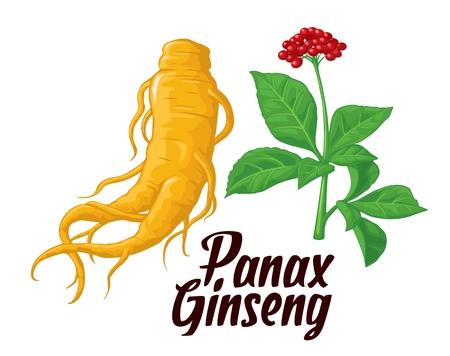 Root en laat Panax ginseng. Vector kleurrijke vlakke illustratie van geneeskrachtige planten. Biologische additieven. Gezonde levensstijl. Voor de traditionele geneeskunde, tuinieren