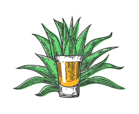 agave: Cactus blue agave with glass tequila. Vintage vector engraving illustration for label, poster, web