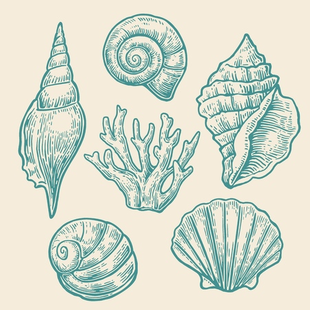 Sea shell. Set color engraving vintage illustrations. Isolated on  white background Ilustrace