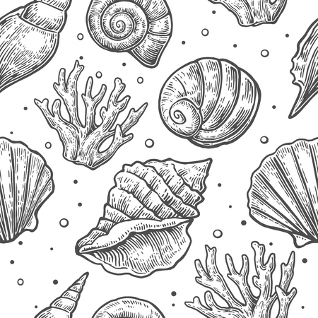 cockle: Seamless pattern sea shell.  Vector engraving vintage illustrations. Isolated on  white background.