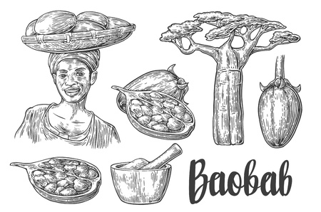 Baobab fruit, tree and seeds. Mortar and pestle. African woman carries a basket on her head. Vector vintage engraved illustration isolated on white background