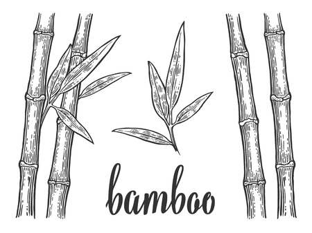Bamboo trees with leaf white silhouettes and black outline. Hand drawn design element. Vintage vector engraving illustration for logotype, poster, web. Isolated on white background. Stock Illustratie